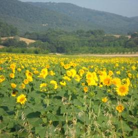 Taste-of-Tuscany-Italy-2011-048
