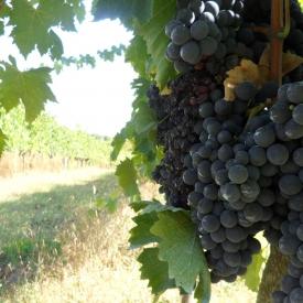 Taste-of-Tuscany-Italy-2011-066