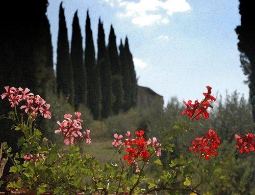 Taste of Tuscany – Italy 2009